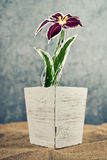 Flower pot with sketched flower Royalty Free Stock Images