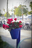 Flower pot in a street. Red flowers in a blue pot outdoor Stock Photo
