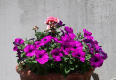 Flower pot in the sun stock photography
