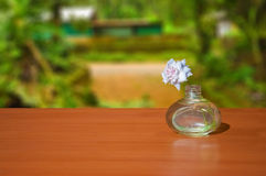 Flower Pot. On a Table with background image stock photography