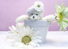 Flower Pot and Teddy Bear Royalty Free Stock Photos