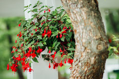 Flower pot on the tree. Flower pot with fresh flowers hanging on a tree Royalty Free Stock Image