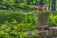 Flower Pot Veranda HDR. View from the Veranda in HDR Royalty Free Stock Images