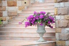 Flower pot Stock Image