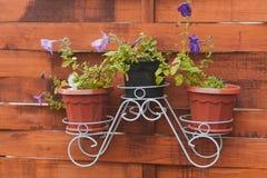 Flower pot violets Stock Image