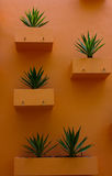 Flower Pot on the wall. Stock Images