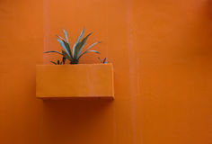Flower Pot on the wall. Royalty Free Stock Photo