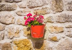 Flowers on the wall. A flower pot on the wall Royalty Free Stock Photos