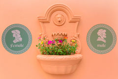 Flower pot on the wall Royalty Free Stock Photos