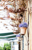Flower pot on the wall Royalty Free Stock Image