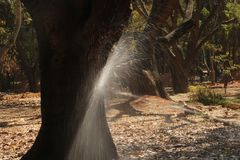 Water splashing on the tree trunk in the park. Flower pot water splashing on the tree trunk in the park stock image