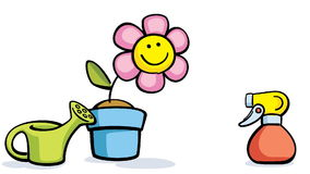 Flower in pot with watering can and sprayer stock video