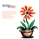 Flower in a pot on a white background and place for text, waterc Stock Images