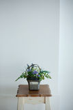 Flower pot with white wall Royalty Free Stock Images
