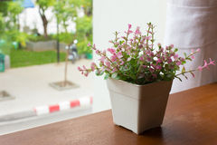 Flower pot by the window Royalty Free Stock Images