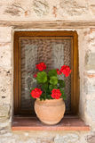 Flower pot in window Royalty Free Stock Photo