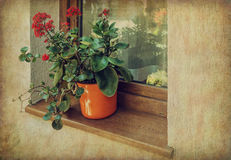 Flower pot at the windowsill. Grunge and retro style Stock Image