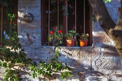 Flower pot on windowsill, rural royalty free stock images