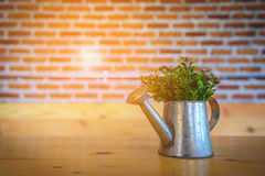 Flower pot on wooden table with blurred red brick wall Royalty Free Stock Image