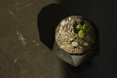 Flower in a pot on a wooden table. In a shadow royalty free stock photos