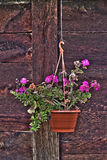 Flower pot on the wooden wall Stock Photos