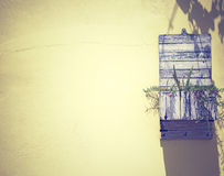 Flower pot with yellow wall in sunlight. Royalty Free Stock Images