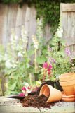 Flower Pots. Photo based textured image of a rustic table with terracotta pots, potting soil, trowel and flowers in front of an old weathered gardening shed Royalty Free Stock Photo