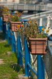 Flower pots. On the street stock photography