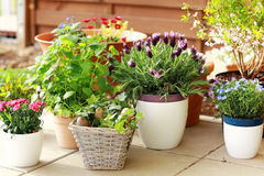 Flower pots. Outdoor flower pots for small garden, patio or terrace Stock Image