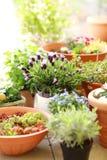 Flower pots Stock Image