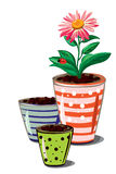 Flower and pots Royalty Free Stock Photos