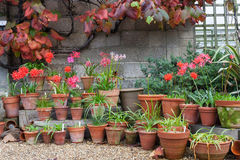 Garden flower pots uk Stock Image