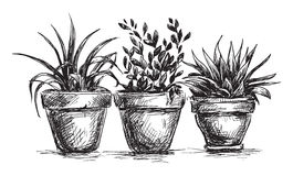 Flower pots. Set of flower pots  in vector Stock Photos