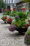 Flower Pots in full bloom. Colourful street flower pots in full bloom in city street Royalty Free Stock Image