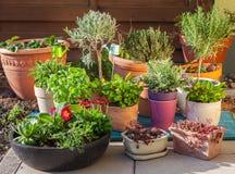 Free Flower Pots Stock Image - 52668121