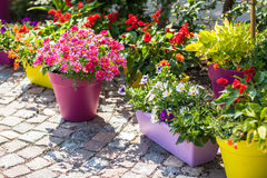 Free Flower Pots Royalty Free Stock Photos - 56322268