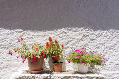 Flower pots against white wall Stock Photo
