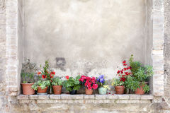 Flower pots on an ancient wall in Tuscany Stock Photography