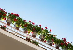 Flower pots on a balcony Stock Images