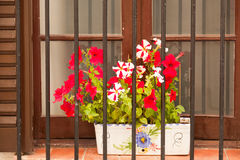 Flower pots on the balcony of  house Royalty Free Stock Image