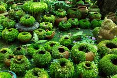 Flower pots covered with moss royalty free stock photo