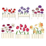 Flower pots with cultivated flowers. Decorative Stock Image