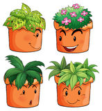 Flower pots with different types of plants Stock Photos