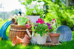 Flower Pots with flowers and gardening utensils on
