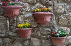 Flower pots Stock Images