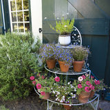 Flower pots in front of green door Royalty Free Stock Photos