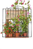 Flower in pots in front of a window Royalty Free Stock Photo
