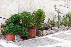 Flower Pots and Garden Outside House. Flowers in pots, and a garden enclosed by small rocks, outside a pale coloured rough rendered house Stock Photos