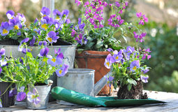 Flower pots on a garden table Stock Photos