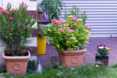 Flower pots in the Garden Royalty Free Stock Photography